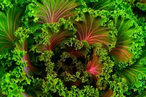 green veggies IV