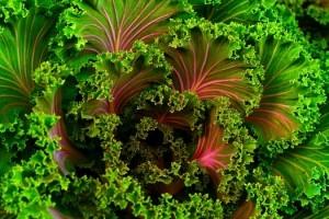 green veggies IV