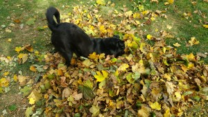 joey-down-dog-with-fall-leaves